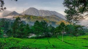 Wisata Sejuk di Puncak Bogor yang Wajib Dikunjungi